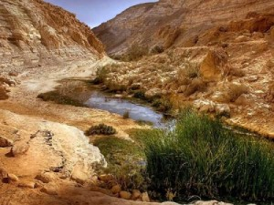 stream in the desert